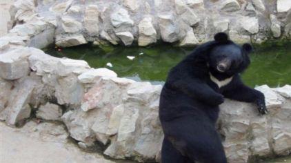 > 神州荒漠野生动物园供应详情  交通信息 自驾路线:武威市——
