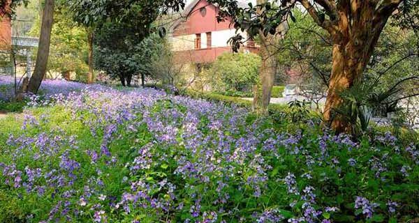 中山植物园东门只在春天,秋天赏花旺季开放,北门一年四季都开放,所以