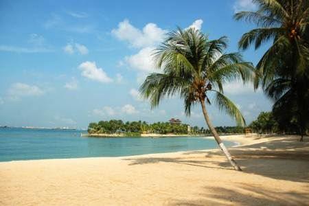 高大的椰子树掩隐着海滩和凉亭,乡村式的木制浮桥通向海中的小岛.