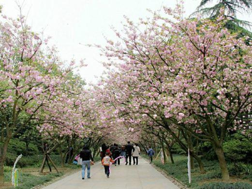南山植物园图片
