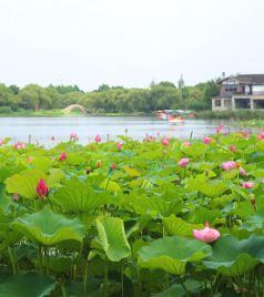 昆山游记图文-吃面、赏荷、泡亚博体育app官网,这个端午假期我们倘佯在江南烟雨间。