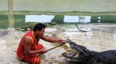 北榄鳄鱼湖动物园-Thai Ban-hiluoling