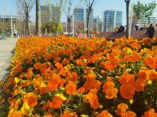 上海鲜花港-上海-馒头Roy