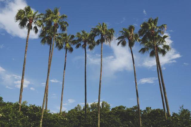 Domestic Staycation 2020: Staycation Atlanta, Staycation Las Vegas, Staycation Los Angeles...