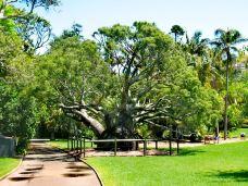 皇家植物园-悉尼-杨昊鑫
