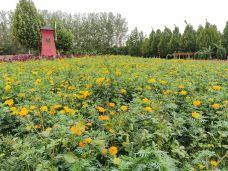 东明黄河森林公园-东明-M55****239