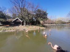 茱萸湾风景区-扬州-M45****9018