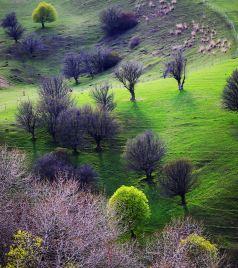 昭苏游记图文-赛里木湖、伊宁、昭苏、八卦城、那拉提、喀什、帕米尔,九天自驾玩转大半个新疆