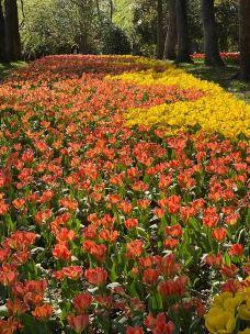 上海鲜花港-上海-我的黑郁金香