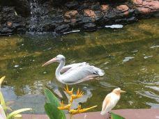 吉隆坡飞禽公园-吉隆坡-52189****77297