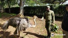 肯尼亚山动物孤儿院-纳纽基