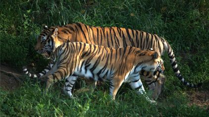 青岛森林野生动物世界12