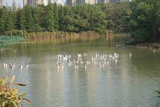 艾溪湖湿地公园-南昌-依然等待^_^