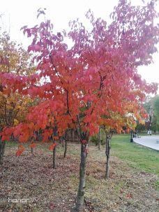 北山公园-吉林市-M42****717