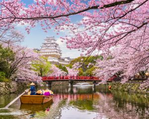 Beautiful Cherry Blossoms: Top Free Sakura Spots in Tokyo 2020