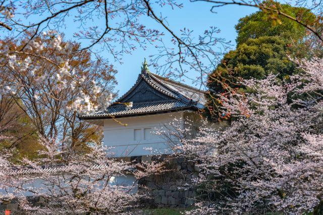Beautiful Cherry Blossoms: Top Free Sakura Spots in Tokyo 2020