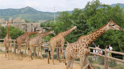 青岛森林野生动物世界16
