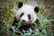 卧龙大熊猫自然保护区-汶川-C-image2018