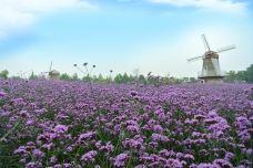 北京国际鲜花港-顺义区-doris圈圈