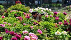 泰山牡丹文化产业园-肥城-AIian