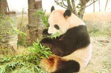 宿州野生动物园-宿州-AIian