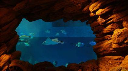 威海神游海洋世界图片 (14)