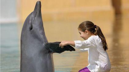 亚特兰蒂斯海豚湾 dolphin bay (18)