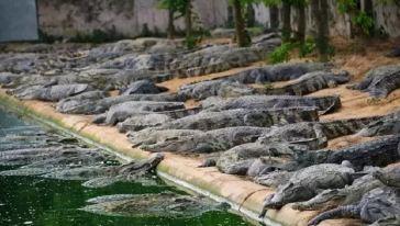 鳄人谷生态旅游区