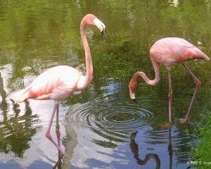 Hand-feeding Flamingo: A Guide to Sarasota Jungle Gardens