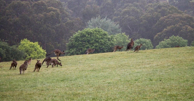 Dandenong Ranges: What to cover on your first day trip