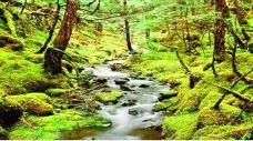森鑫森林公园-顺义区-金小同