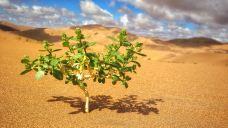 巴丹吉林沙漠-阿拉善右旗-是条胳膊