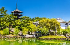 猿泽池-奈良-doris圈圈