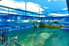 温州海洋馆-温州-AIian