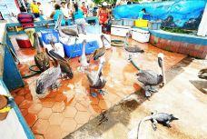 The Fish Market-巴拿马城-juki235