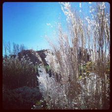Idea Garden-伊利诺伊州