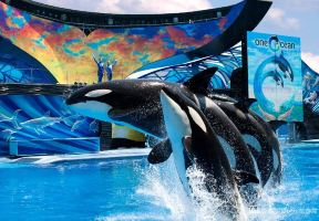 Spend Your Day at  Seaworld Orlando