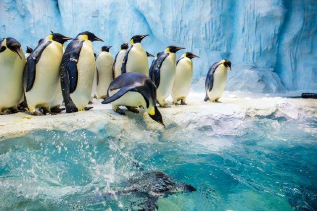 Visit the Best Ocean Theme Park in Zhuhai: Chimelong Ocean Kingdom