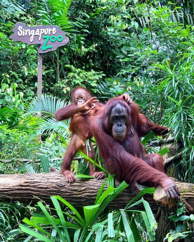 【新加坡自由行】8個新加坡親子遊好去處👨👩👦
