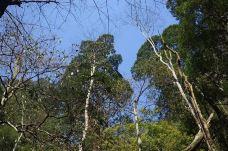 莽山国家森林公园-莽山-M38****7713