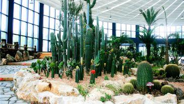 热带沙生植物科普馆2