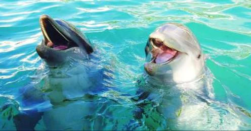 Experience one-of-a-kind aquarium, Miami Seaquarium
