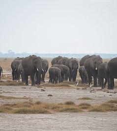 肯尼亚游记图文-肯尼亚印象——安博塞利