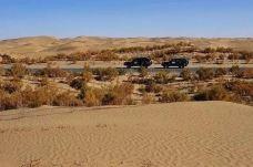 塔克拉玛干沙漠(巴音郭楞)-巴音郭楞-M37****1777