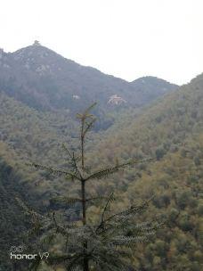 云阳国家森林公园-茶陵-_WeCh****19143