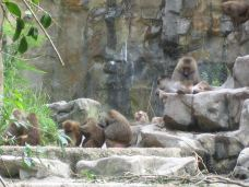Monkeyland -Greater Plettenberg Bay