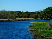 Nature Gem in Sarasota: Guide to Myakka River State Park