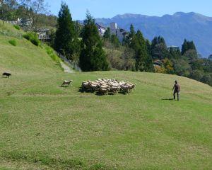 7 Special Experiences on Qingjing Farm, the Mini Switzerland in Taiwan