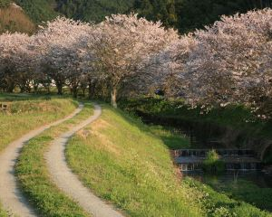 The 6 Must See Cherry Blossom Spots of Kyushu's Cherry Blossom Season