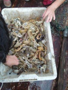 月坨岛-乐亭-出海打鱼